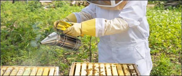 дымарь для пчёл