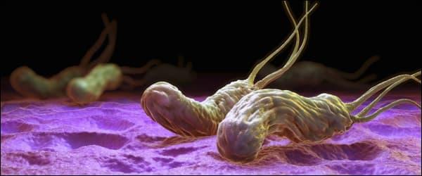 гастрит helicobacter pylori
