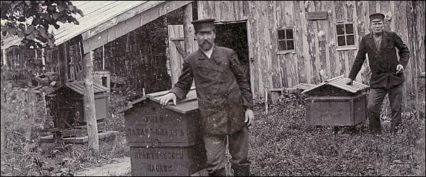пчеловодство во время второй мировой войны