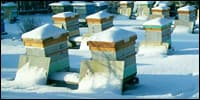 зимние осмотры пчёл