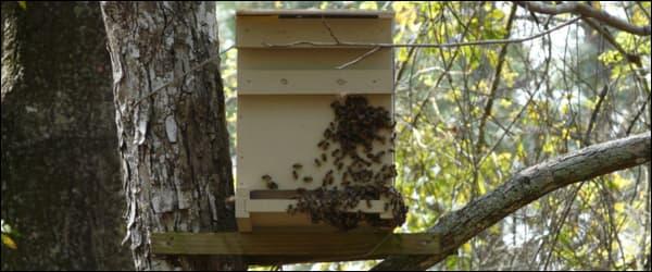 ловушка для пчёл на дереве