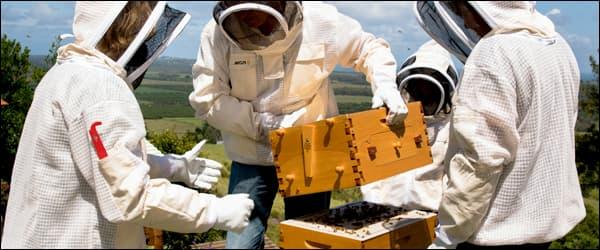 техника безопастности пчеловодства