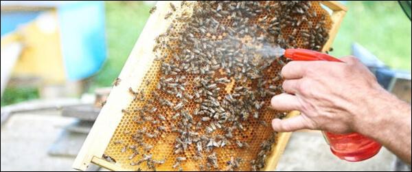 Обработка пчел Тимолом