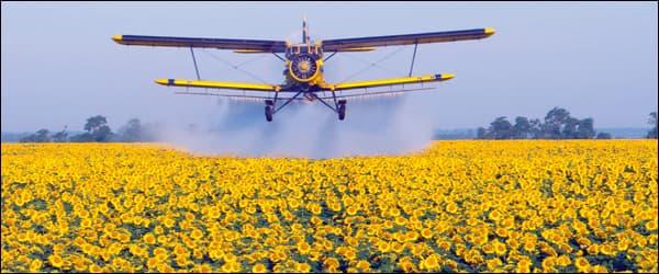 угроза пчёлам опыление садов ядохимикатами