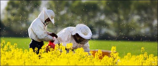 эффективная работа пчеловодов