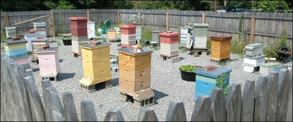 пасека начинающего пчеловода