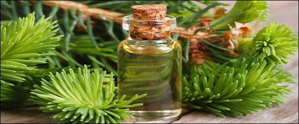 Пихтовое масло для лечения акарапидоза