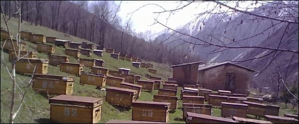 Расстановка ульев в горной местности