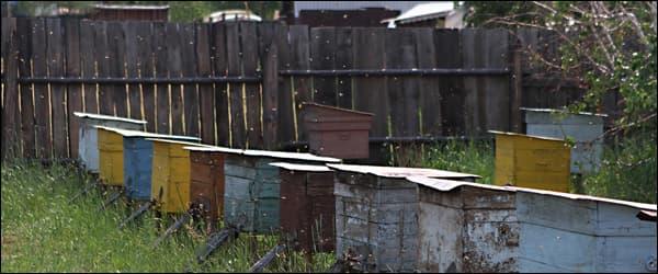 правилами содержания пчел предписано высокий забор на пасеке