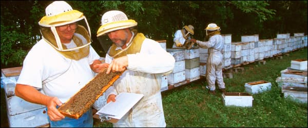 весенние работы на пасеке осмотр пчелиных семей