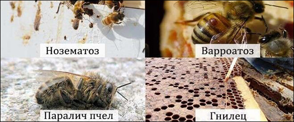 Весенние заболевания пчел