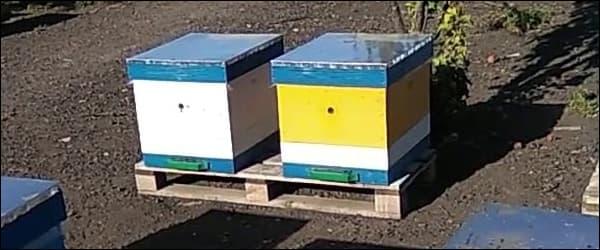 весной ставим пчелиные ульи на поддоны