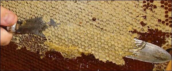 как срезают забрус с медовой рамки