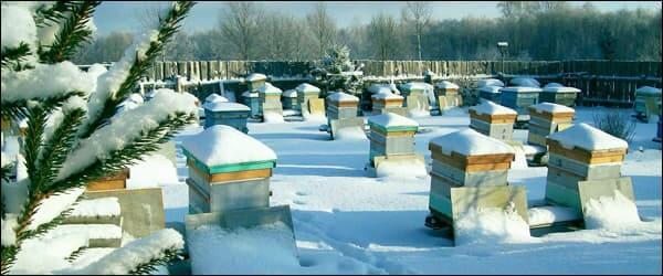 пчёлы зимой на воле под снегом