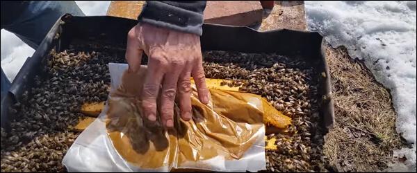 пергаментная бумага при подкормке пчел